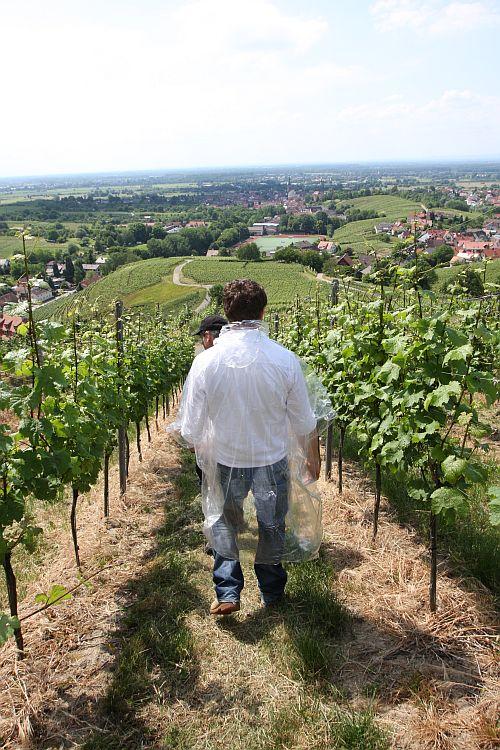 Neuweier Weinwandertag 2011