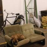 Dutch Design Week 2014 Sectie C dog
