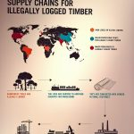 Illegal timbers' way to untraceable plywood, graphic by Irish Butcher Studio, as seen at Plywood: Material of the Modern World, the V&A Museum London