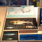 The (currently non-interactive) interactive fisheries exhibit, as seen at Future Food. What will we eat tomorrow?, Deutsches Hygiene-Museum, Dresden