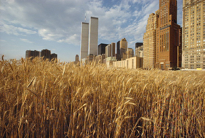 Wheatfield - A Confrontation: Battery Park Landfill, Downtown Manhattan (1982) by Agnes Denes, part of Down to Earth, Gropius Bau, Berlin (photo © Agnes Denes, courtesy Berliner Festspiele)